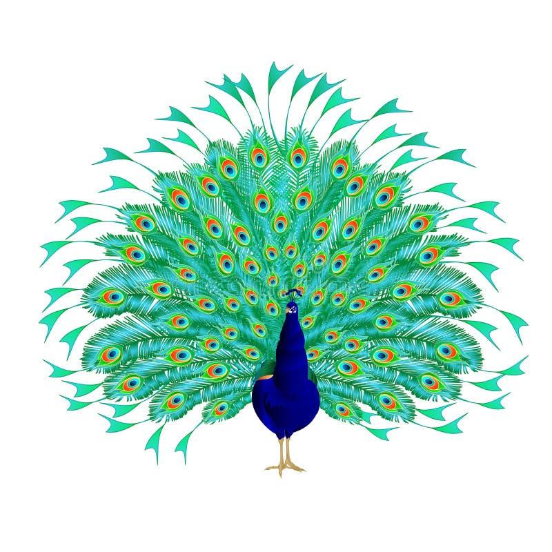 De tropische vogel van de pauwschoonheid op een witte achtergrond editable waterverf uitstekende vectorillustratie royalty-vrije illustratie