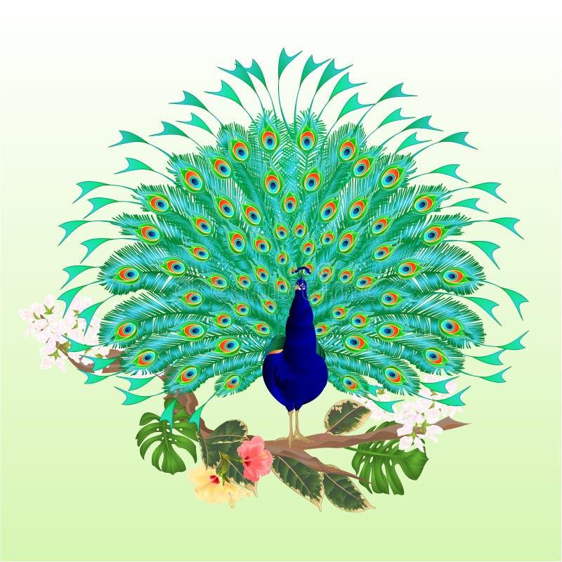 De tropische vogel van de pauwschoonheid op tak met editable hibiscusficus en philodendron waterverf uitstekende vectorillustrati vector illustratie