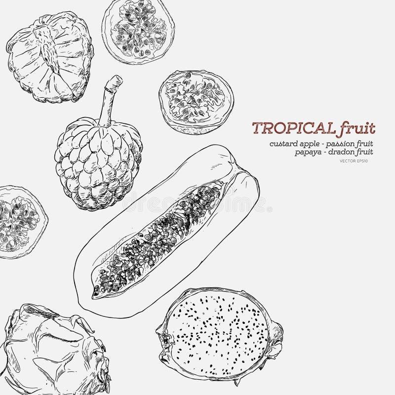 De tropische vruchten hand trekt vectorreeks royalty-vrije illustratie