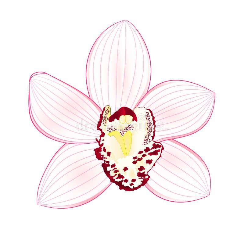 De tropische witte bloem van Orchideecymbidium realistisch op witte uitstekende vector editable illustratie als achtergrond royalty-vrije illustratie