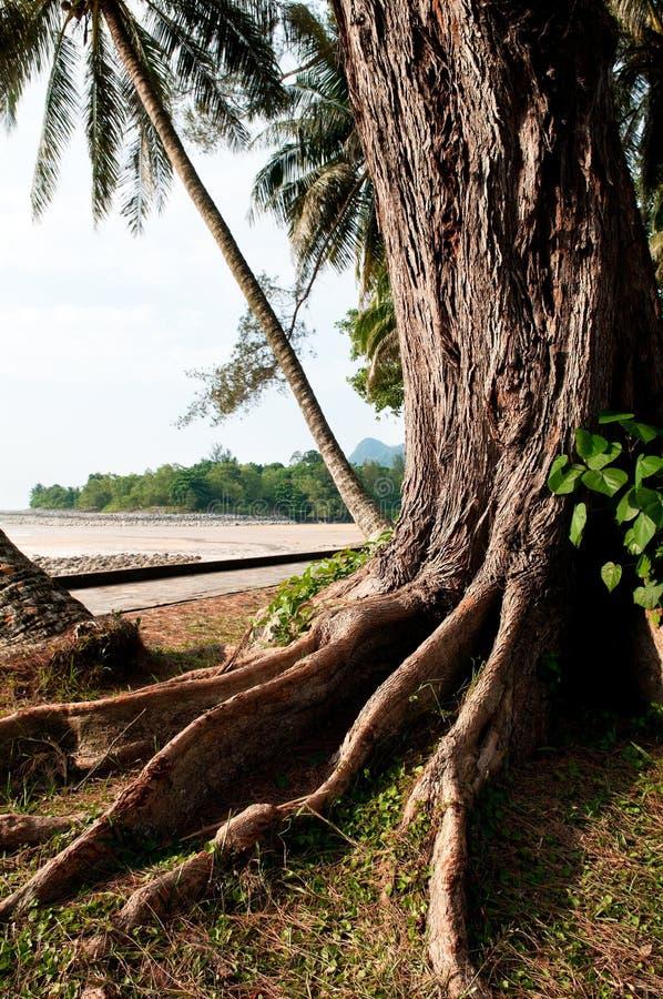 De tropische Wortels van de Boom stock fotografie