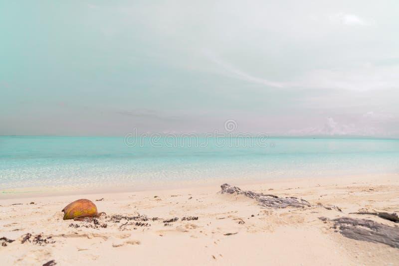?de tropiskt f?r strand royaltyfri bild