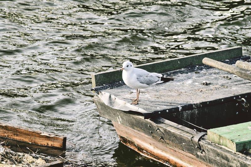 De Tsjechische vogel van de rivierzeemeeuw in Praag stock fotografie