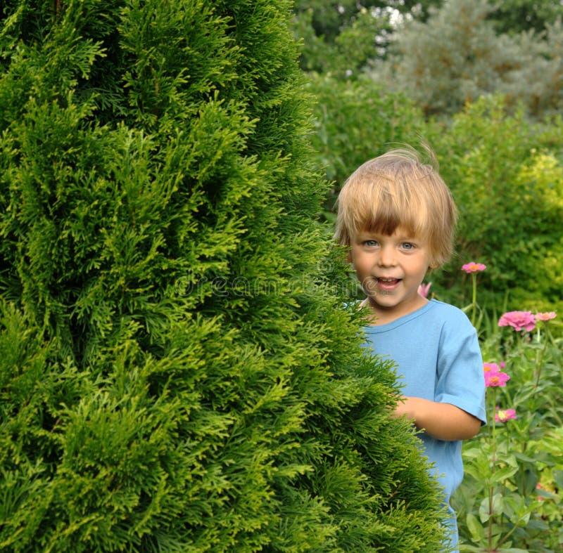 In de tuin royalty-vrije stock foto's