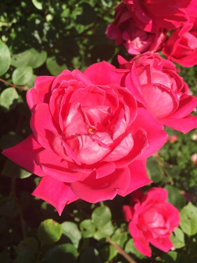 In de tuin royalty-vrije stock afbeelding