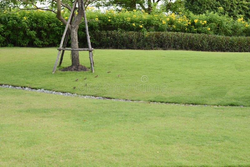 De tuin en het groene gazon, ontwierpen prachtig stock afbeelding