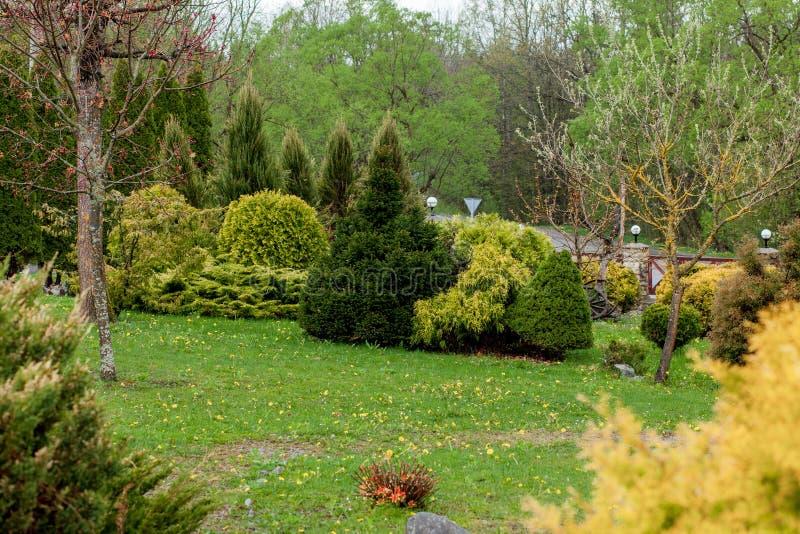 De tuin, het landschap van geometrische vormstruik en de struik verfraaien met kleurrijke bloem die in groen bloeien royalty-vrije stock afbeeldingen