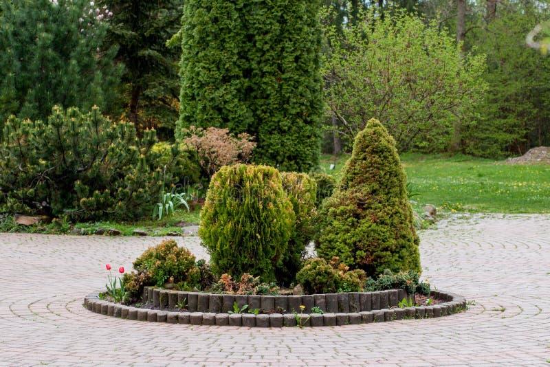 De tuin, het landschap van geometrische vormstruik en de struik verfraaien met kleurrijke bloem die in groen bloeien stock foto's