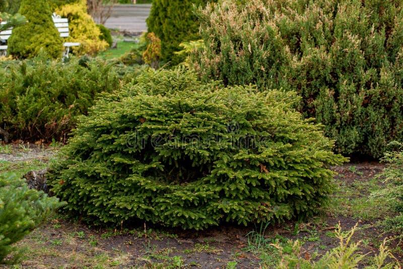 De tuin, het landschap van geometrische vormstruik en de struik verfraaien met kleurrijke bloem die in groen bloeien royalty-vrije stock foto's