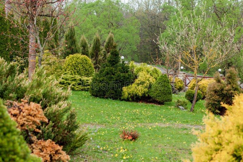 De tuin, het landschap van geometrische vormstruik en de struik verfraaien met kleurrijke bloem die in groen bloeien royalty-vrije stock fotografie