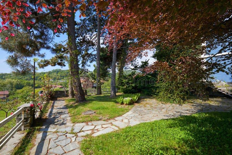 De tuin met steen betegelde weg, rode beuk en pijnboomboom in een zonnige dag, Italië royalty-vrije stock afbeelding