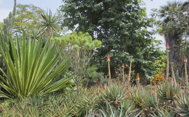De tuin van Cactoo stock foto's