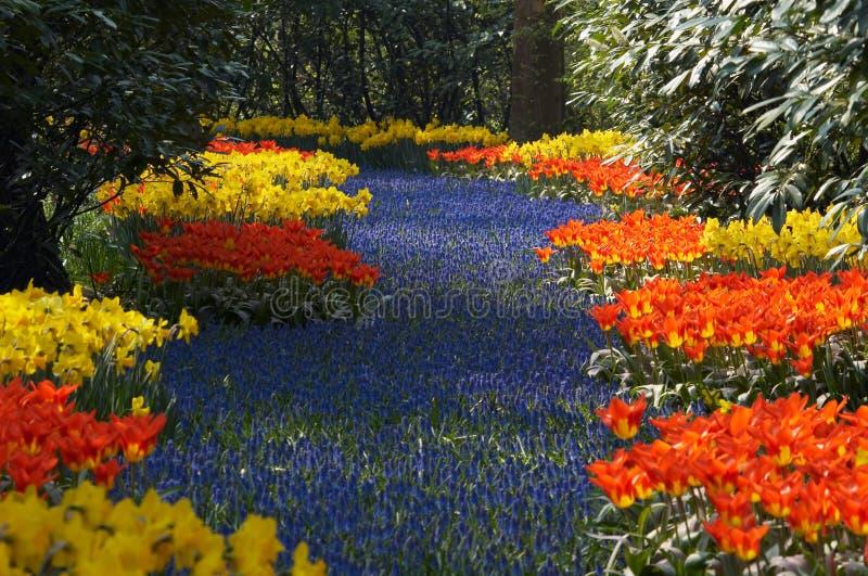 De tuin van de bloem in de lente