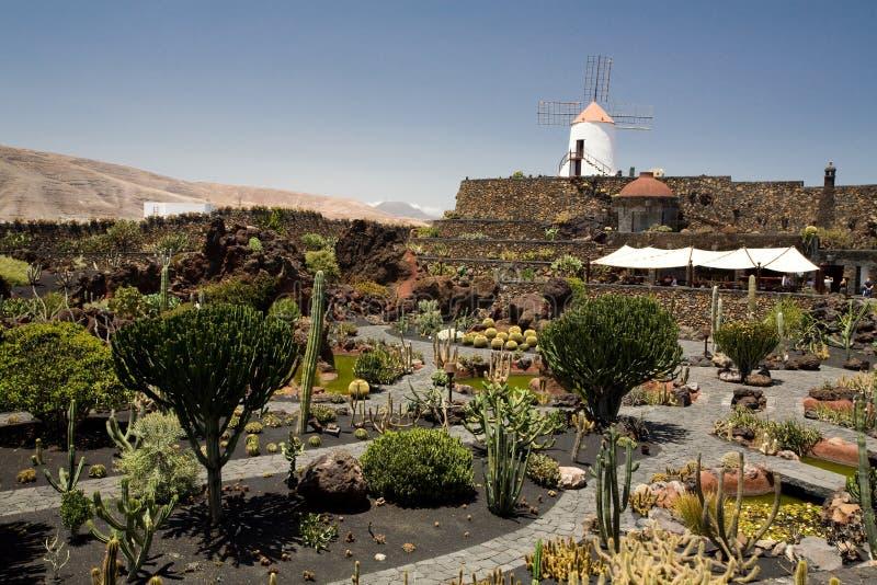 De Tuin van de cactus royalty-vrije stock afbeeldingen