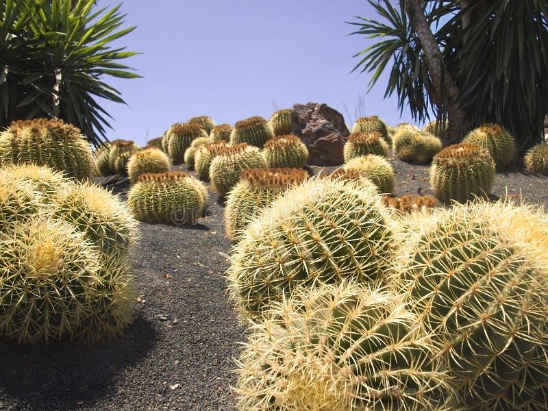 De tuin van de cactus royalty-vrije stock afbeelding