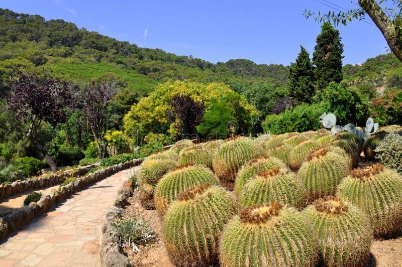 De tuin van de cactus in Blanes stock afbeelding