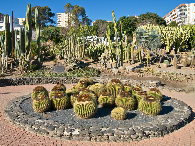 De Tuin van de Cactus van het Centrum van de stad, Spanje royalty-vrije stock foto's