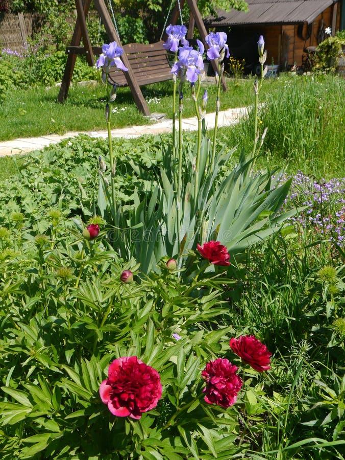 De tuin van de de zomertijd bloeit het huis van decoratieinstallaties het leven royalty-vrije stock foto's