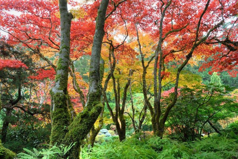 De tuin van de herfst stock afbeelding