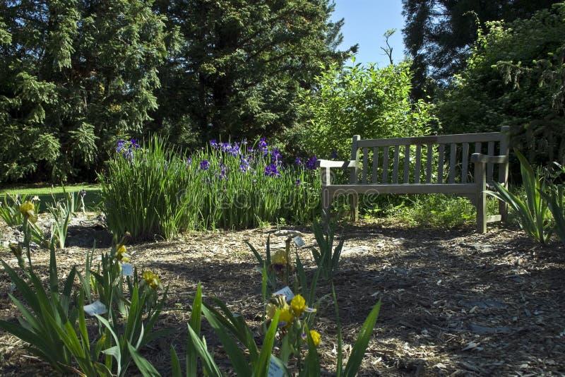 De Tuin van de iris stock fotografie