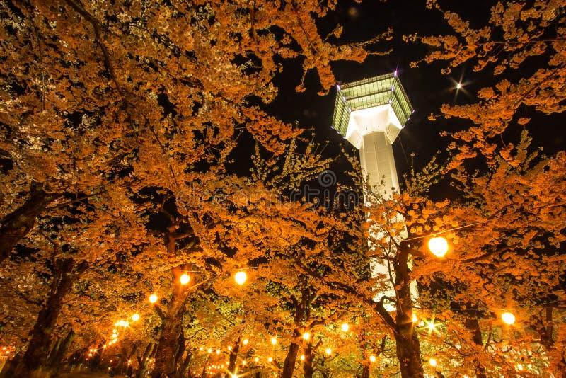 De tuin van de kersenbloesem onder de Goryokaku-Toren stock afbeelding