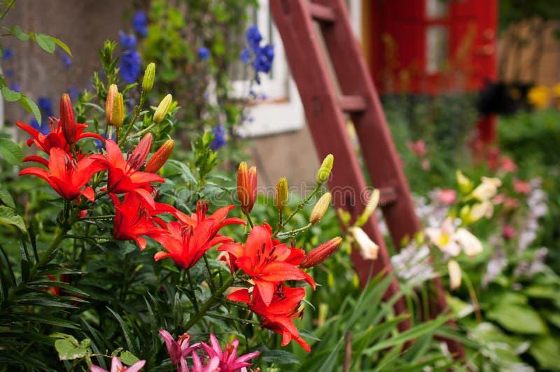 De tuin van de lelie stock afbeelding