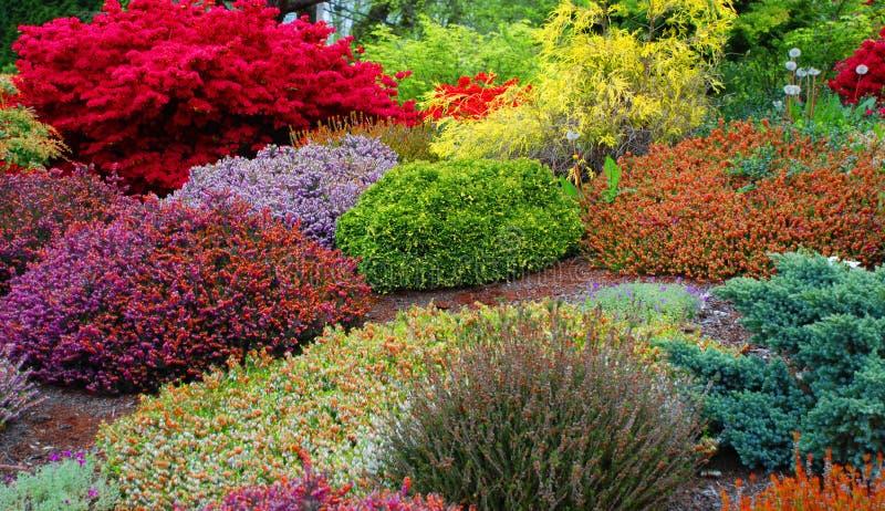 De Tuin van de lente stock foto's