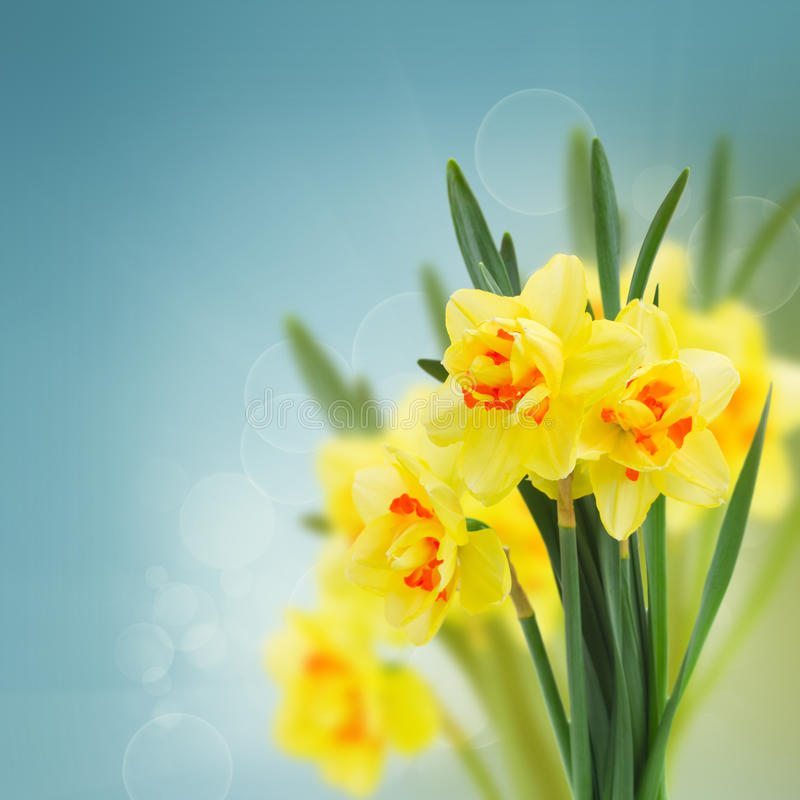 De tuin van de lentenarcissen royalty-vrije stock foto's