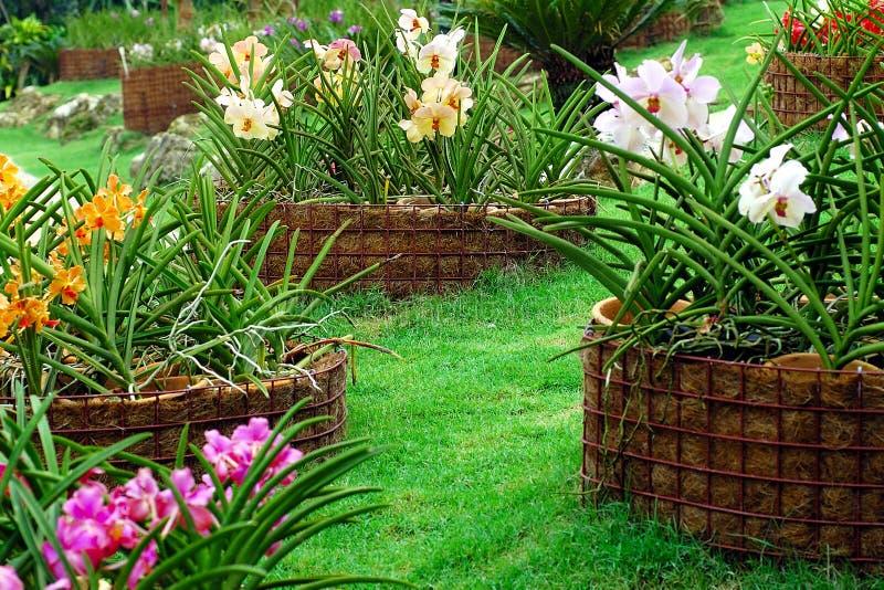 De Tuin van de orchidee royalty-vrije stock afbeelding