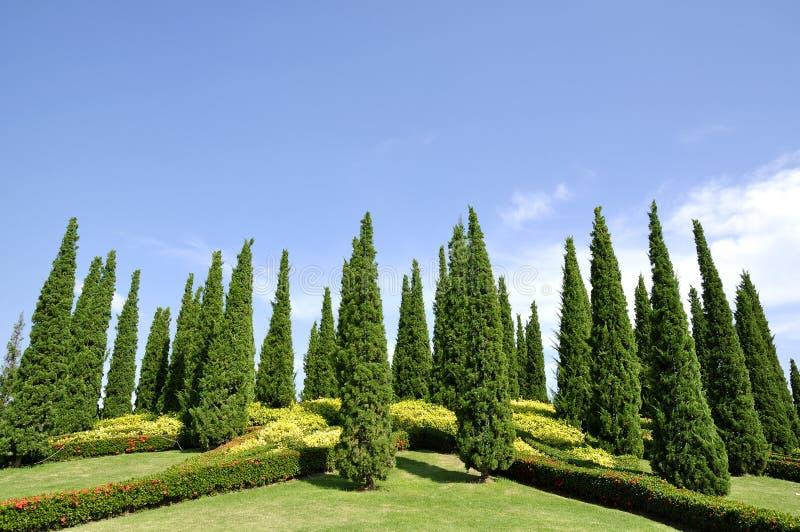 De tuin van de pijnboom, openluchtruimte stock foto's