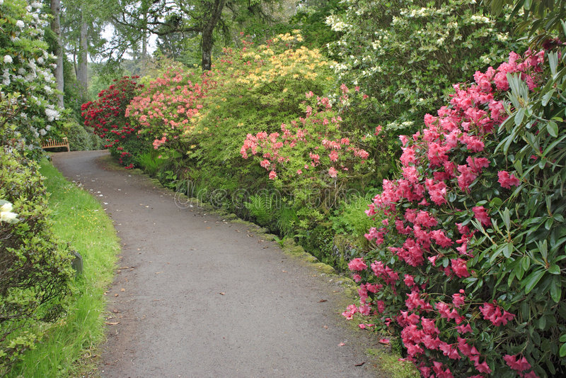 De tuin van de rododendron royalty-vrije stock afbeelding
