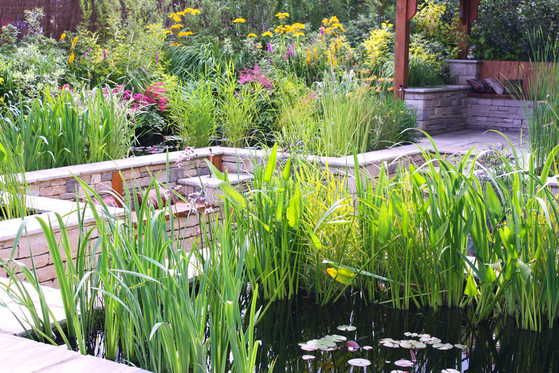 De tuin van de vijver stock afbeelding