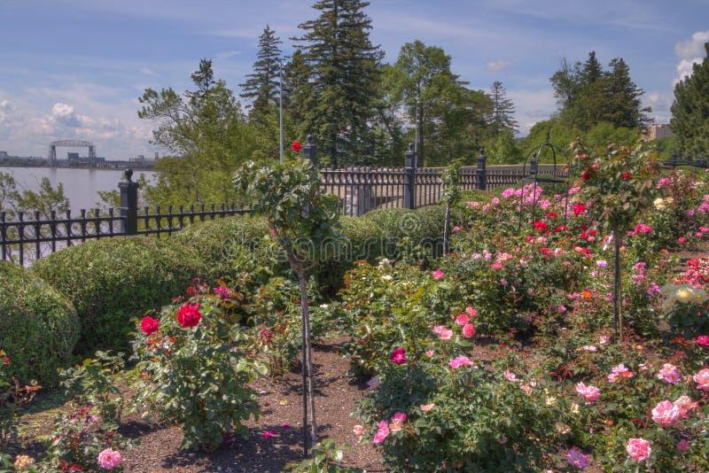 De tuin van de Duluth` s bloem in de zomer stock foto
