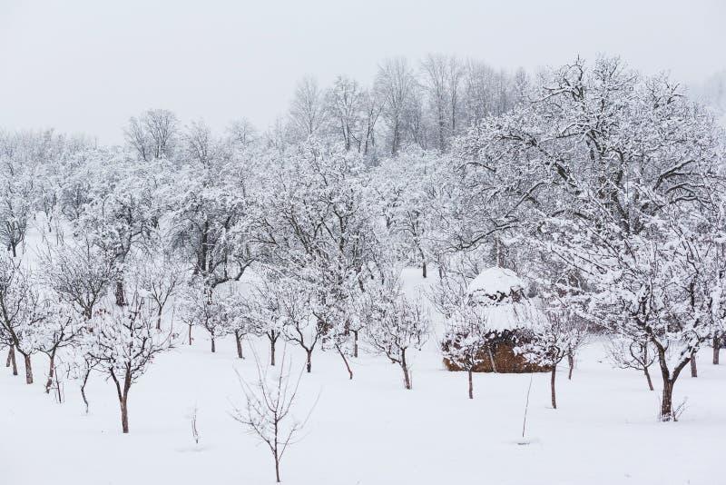 De tuin van het de winterplatteland royalty-vrije stock fotografie