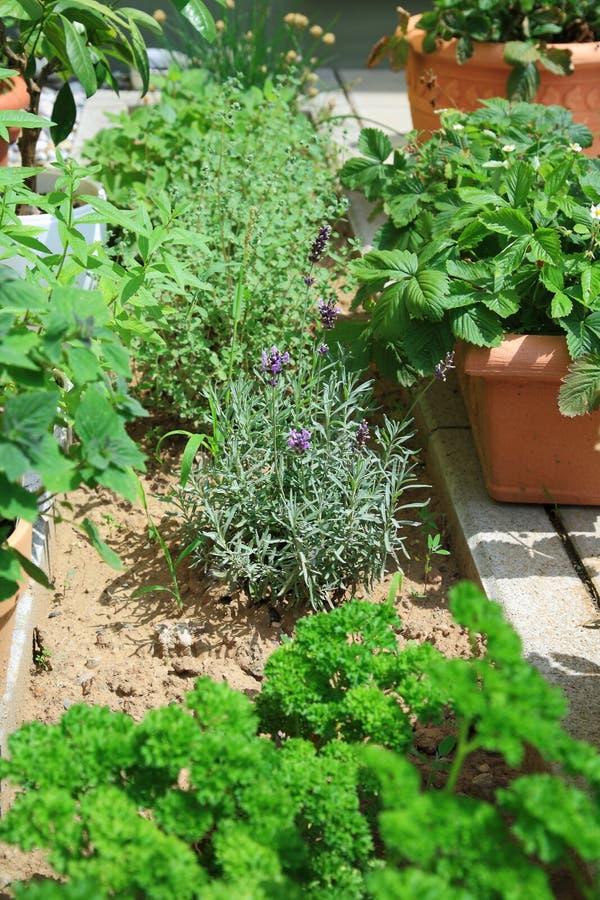De tuin van het kruid stock foto's