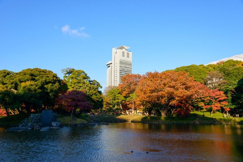 De Tuin van Koishikawakorakuen in de Herfst in Tokyo stock afbeeldingen