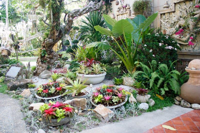 De tuin van Nice, groene decoratieinstallaties bij een toevlucht in Phuket, Thailand royalty-vrije stock afbeeldingen