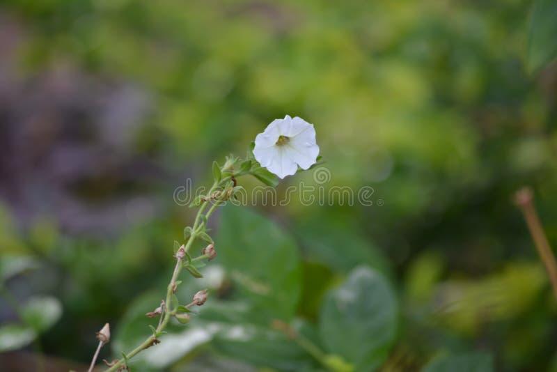 De Tuin van Pachmari van de bloemfoto royalty-vrije stock foto