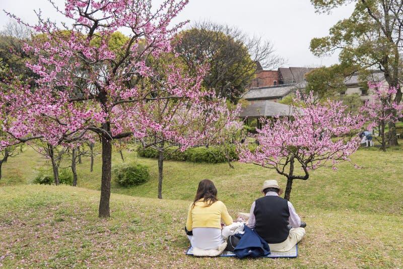 De tuin van de Sakurabloem in Osaka, Japan stock afbeeldingen