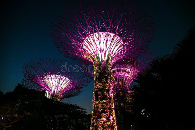 De tuin van Singapore Boedha, chinatown Supertrees in Tuinen door de Baai, op het gebied van de jachthavenbaai in Singapore wordt stock foto's