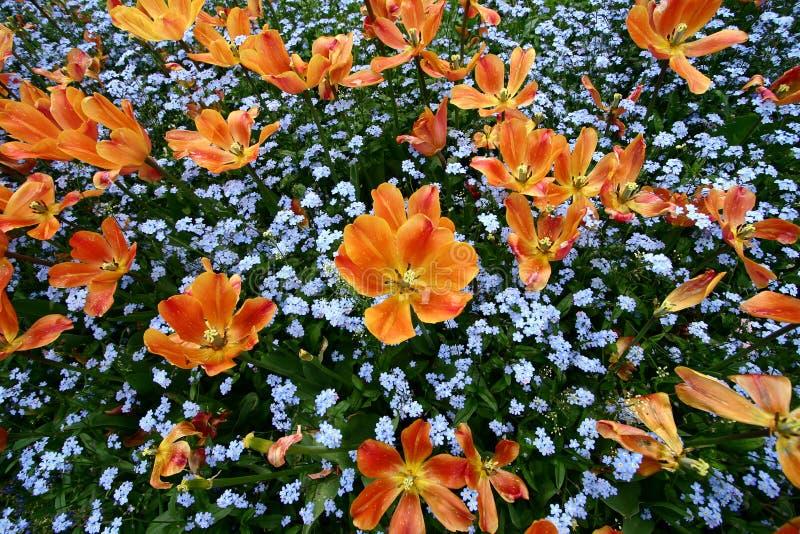 De tuin van tulpen stock fotografie