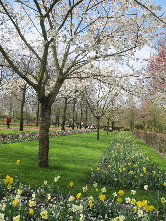 De tuin van tulpen stock foto