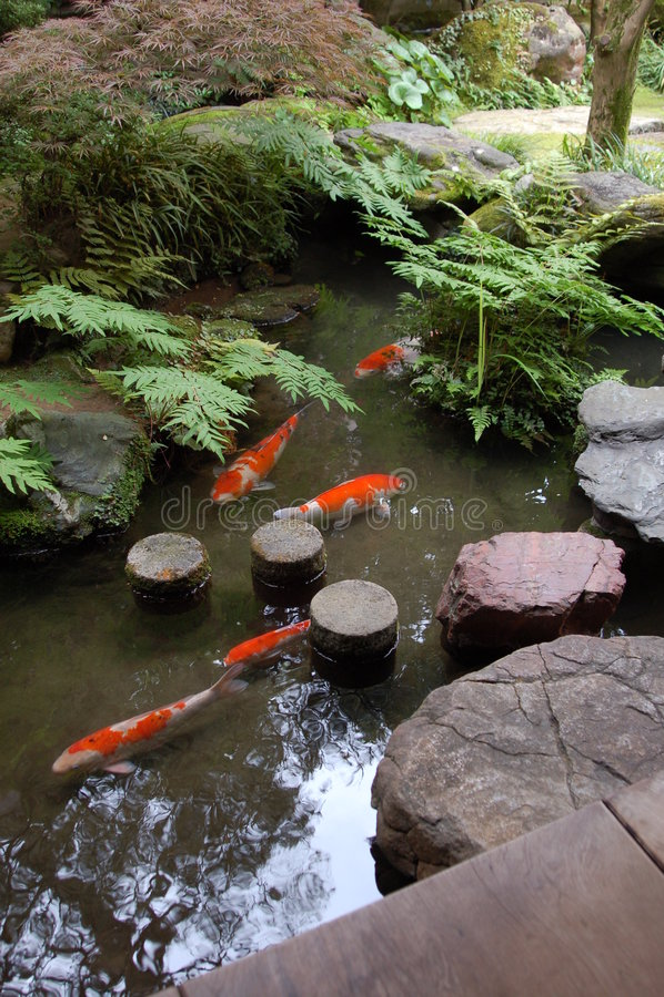De tuin van Zen, vijver Koi stock afbeelding