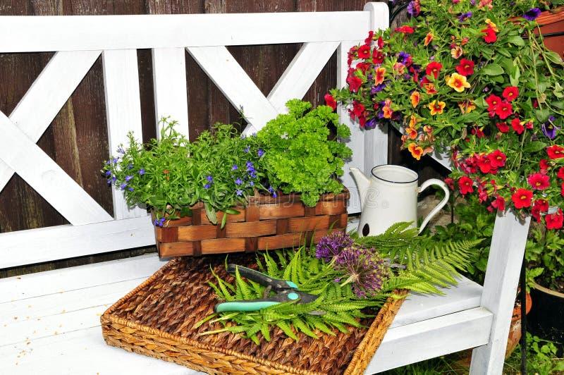 De tuinbank van het kruid royalty-vrije stock foto