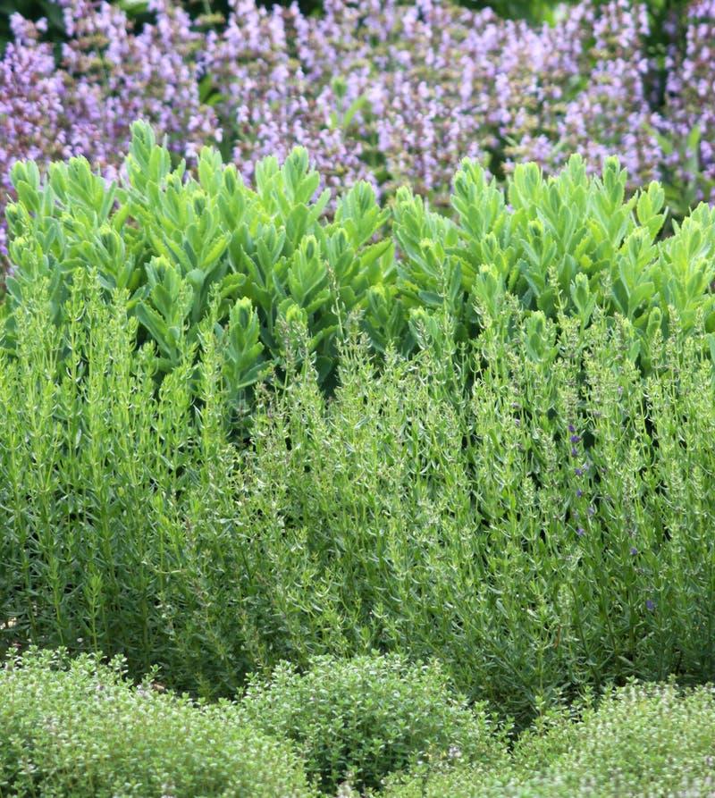 De tuinbed van kruiden royalty-vrije stock foto