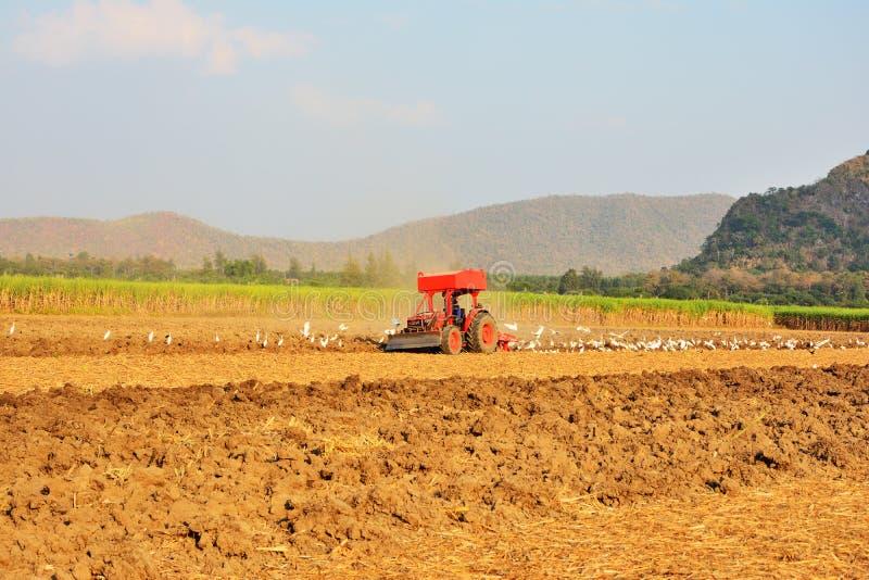 De tuinbouwer drijft de trekker om de grond te cultiveren Pelikanen die op zoek zijn naar voedsel stock fotografie