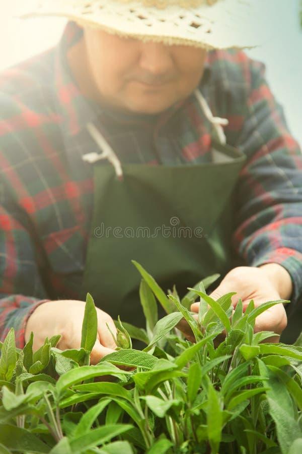 De tuinconcept van de lente. royalty-vrije stock afbeelding