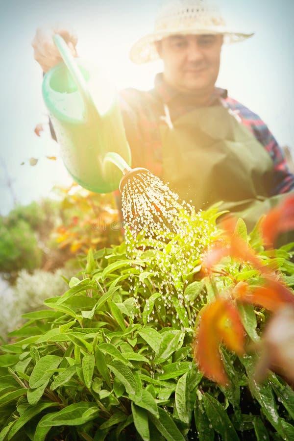 De tuinconcept van de lente. stock foto's