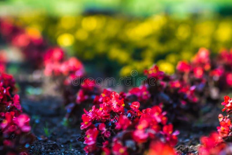 De tuinen van Duncan in Spokane wshington royalty-vrije stock afbeelding