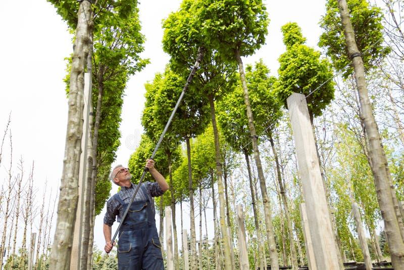 De tuinman behandelt de jonge bomen stock afbeeldingen